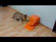 고양이 밥통