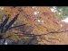 2017 11 03 오륜공원 사는 토끼와 대화