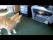 고양이에게 프린터란