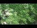 423공원일기 분수대 짝찾는 참새