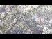 424공원일기 송화와 거리꽃