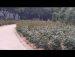 509공원일기 장미