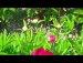 517공원일기 양귀비 장미대나무 작약