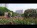 520공원일기 장미 양귀비 리본 구름 채운 햇무리