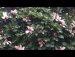 공원일기 목련 장미